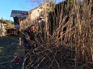 zurückschneiden der Jumbogräser