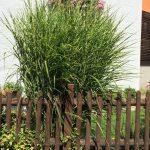 Gartenzaun mit Gras, Gräser