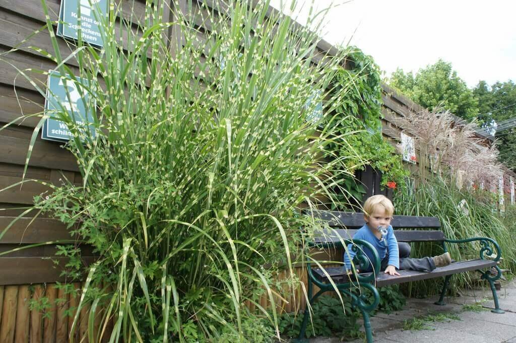 Stachelschweingras in Gartenbeete gepflanzt mit Sitzgelegenheit