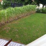 Heckenpflanzen als Sichtschutz für Gartengestaltung
