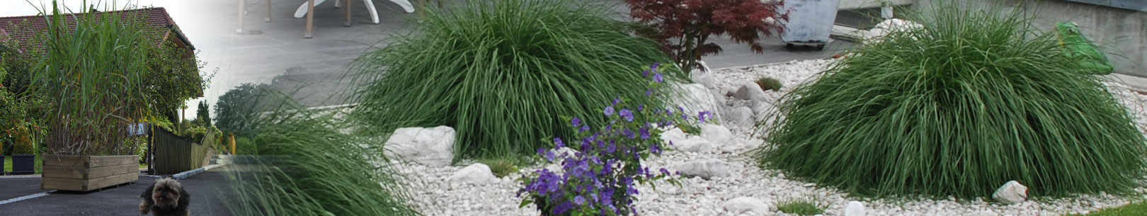 jumbograshecke-pflanzen-balkon-terasse