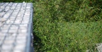 In Kombination mit Steinkörben für moderne Gartengestaltung/Vorgarten