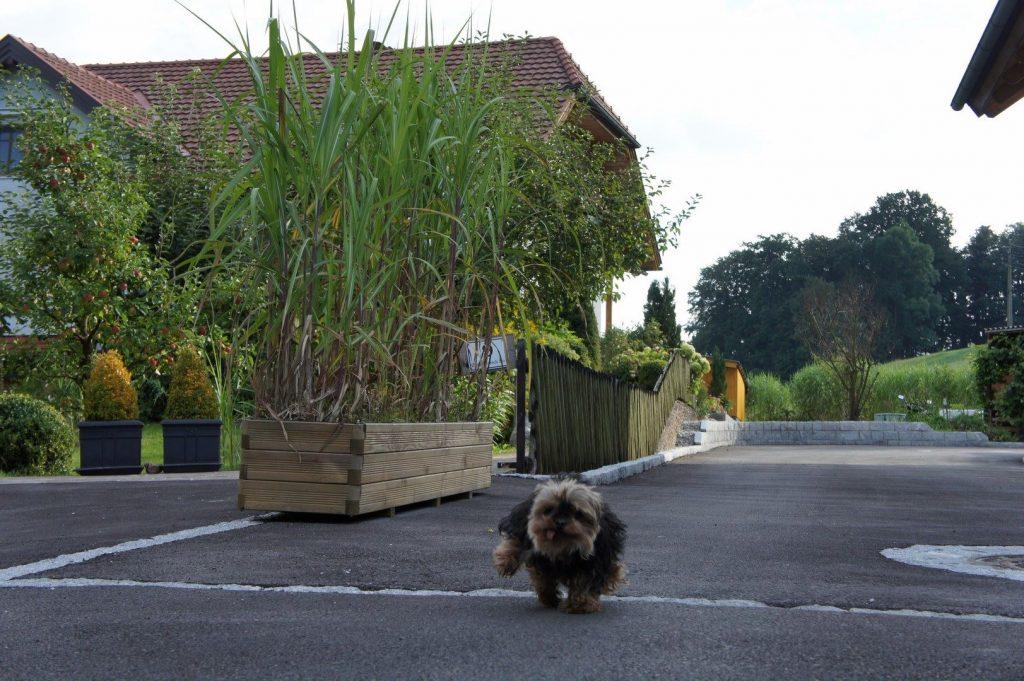 Trog- und Topfpflanzung mit hochwachsenden Gräsern als Raumteiler oder Sichtschutz