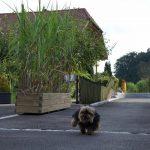 Trogbepflanzung mit Jumbo-Gräsern und Hund