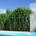 Gräser als Sichtschutzzaun für deine Gartengestaltung & Terrasse