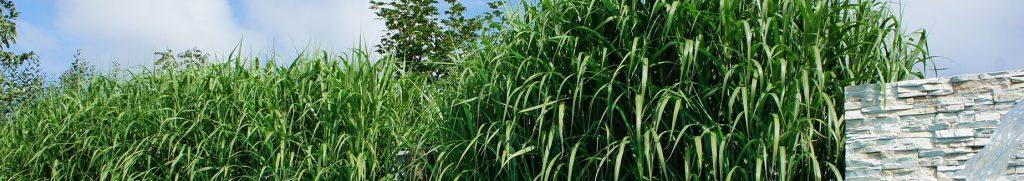 Gräser als Sichtschutzzaun für deine Gartengestaltung & Terrasse ...