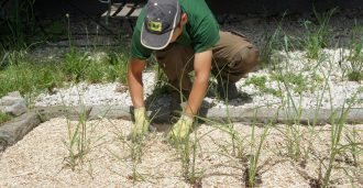 Beet mulchen mit Rindenmulch Ersatz Jumbograsmulch
