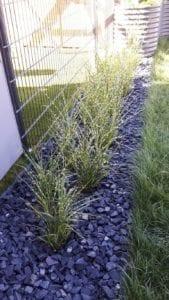 Strictus-Gräser als Hecke mit Stein-Mulch gepflanzt