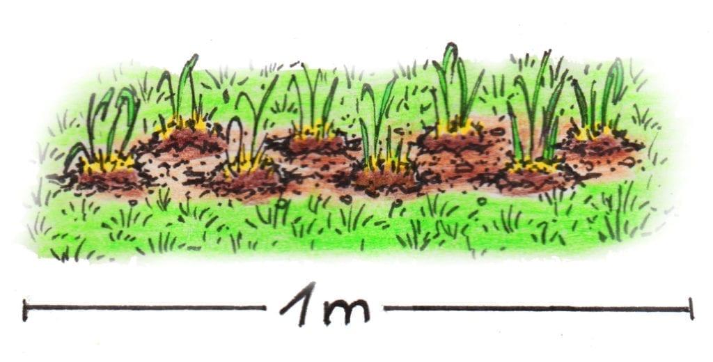 Skizze mit Jumbogras-Stöcken pro Laufmeter