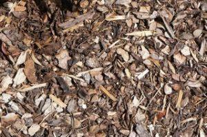 Rindenmulch grob, hier als Bodenschutz bei Physocarpos