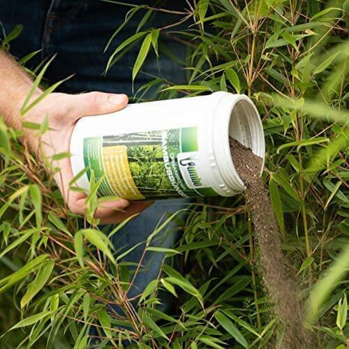 einfache Handhabung des Bambusdüngers, einfach aus der Dose heraus zwischen die Pflanzen schütten