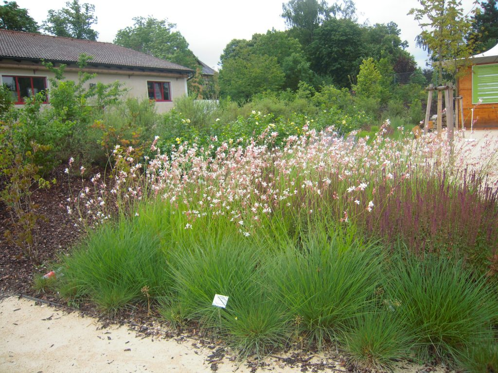 Prachtkerze, im Vordergrund Ziersalbei und Lampenputzergräser