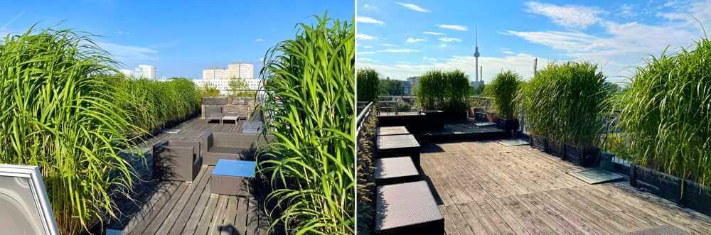 Dachterrassenbepflanzung mit Jumbogräsern